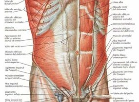 Zona abdominal